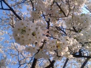 Kanazawa-Shi-20140408-01376